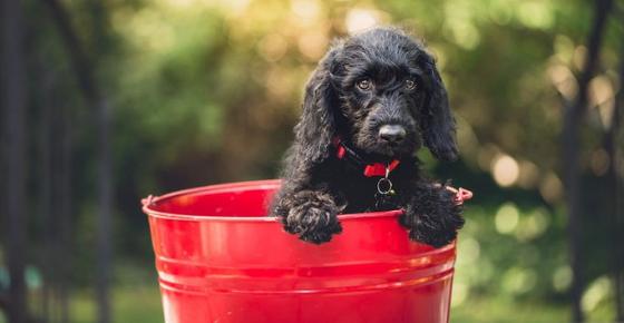 ¿Cómo acabar con las pulgas? Detectar pulgas activas en mascotas tratadas