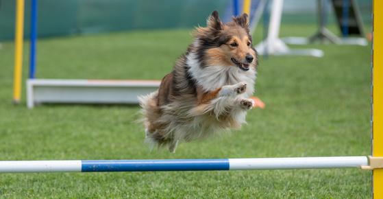 Juegos para perros: actividades para hacer con tu mascota