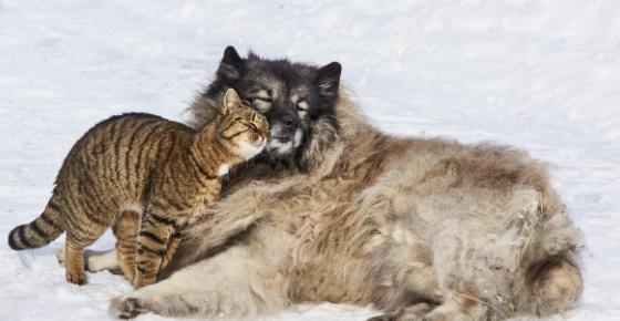 Garrapatas en casa: proteger a nuestra mascota en primavera.